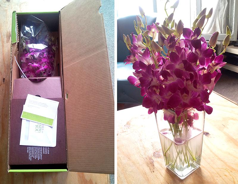 Maryrose_flowers_web